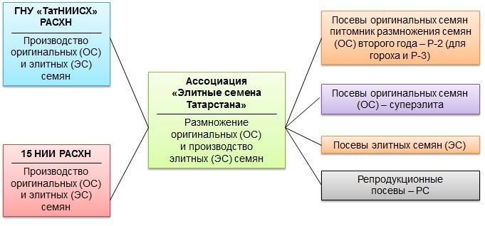Схема производства семян элиты для проведения сортосмены и сортообновления.